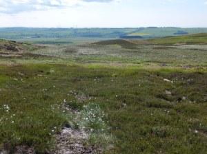 Peat bog on the moor