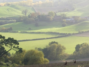 The Teme Valley 3