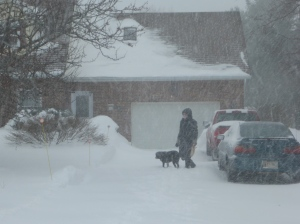 Walking the dog yesterday--Notice the blue car behind the red truck. Photo courtesy Tim Goddard.